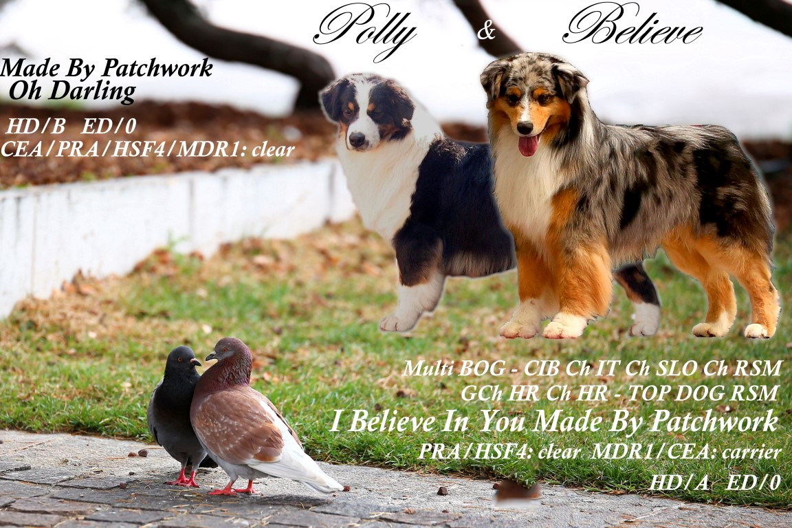Polly x Believe cuccioli
